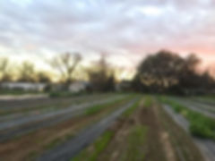 July 19 2020 An Urban Farm Paradise .jpg