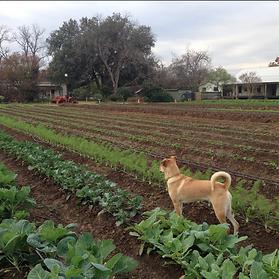 Rent Unique Home | Austin TX | 5 Acre Urban Farm | Boggy Creek Farm