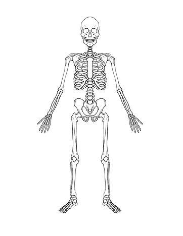 Figure 2.1-1.Full-Skeleton.jpg