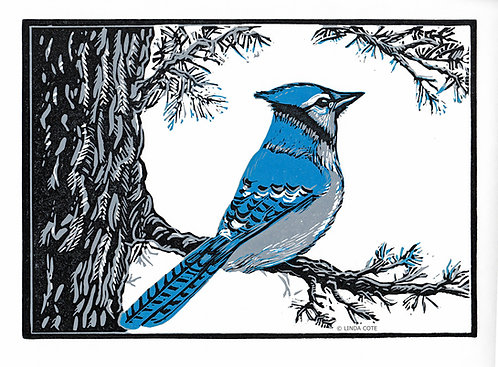 Blue Jay's Perch