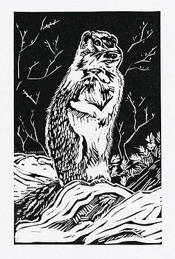 Mountain Squirrel
