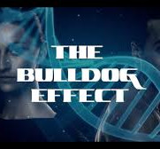 Avaah_Blackwell_Bull_Dog_effect_Title_pa
