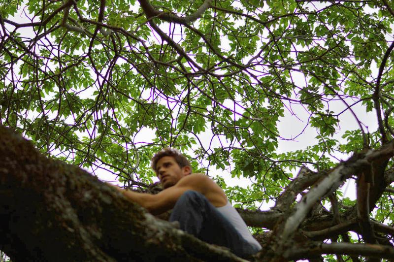 Tree Top Livin'