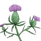 scottish clover.jpg