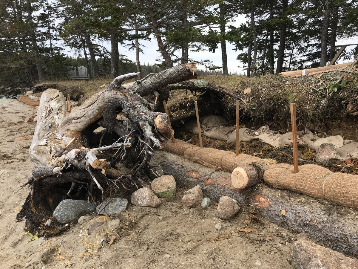 Anchored logs and coir rolls