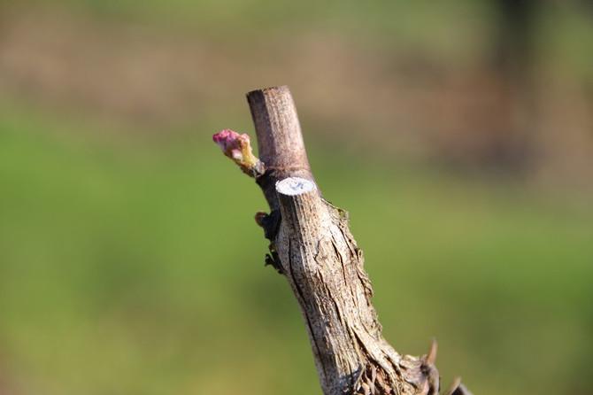 Découverte de vins effervescents