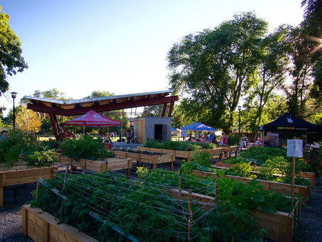 Oasis Summer Nights welcomes locals to community garden for live music, art, more