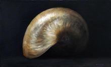 Recursion (Nautilus shell)