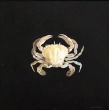 Hollow (sand crab)