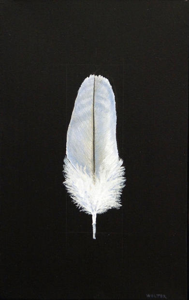 Learning to fly (immature seagull feather)