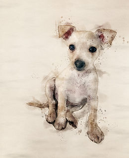 Watercolor Pet Portrait Gifts