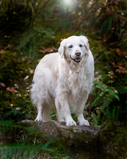 Pet Photography Session Deposit