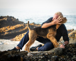 Portland Pet Photographer Airedale Terrier