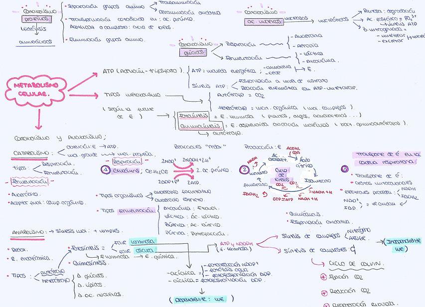 Metabolismo Celular - Misitio 1