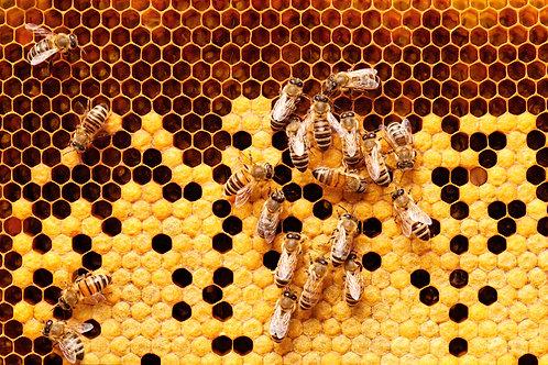 Odkłady pszczele 6 ramek wielkopolskich
