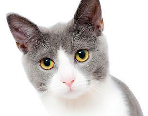 kitten on white.jpg