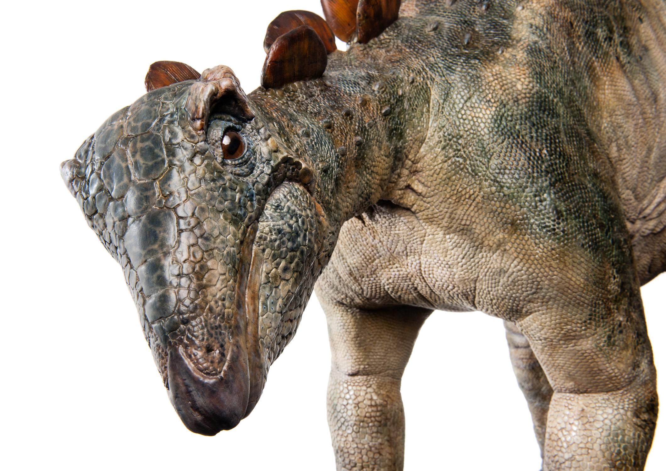 Juvenile Stegosaurus Male