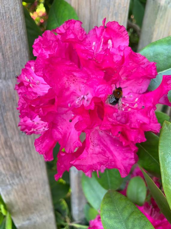 Wenn die Blumen lachen, duftet die Welt.