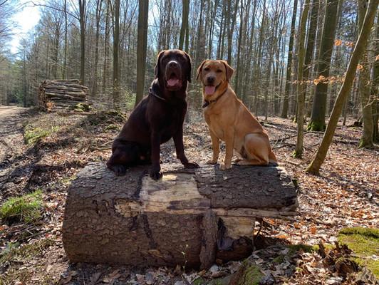 Unsere Hofhunde Nora und Bruno.