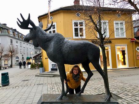 """På """"elg-safari"""" og kor-tur til Hønefoss"""