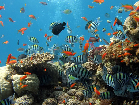 En dag på øya Cozumel
