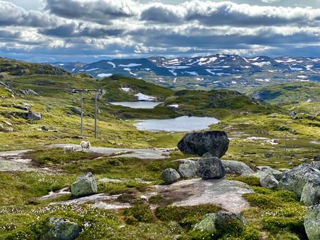 Stavanger og hjemturen over Suleskar