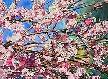 Spring Radiance.jpg