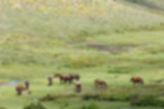 vallée du taravo corse du sud