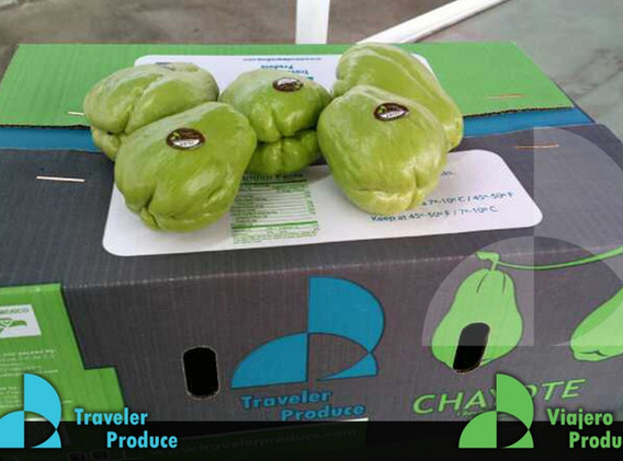 Mexican-Chayote-importer-exporter-dealer