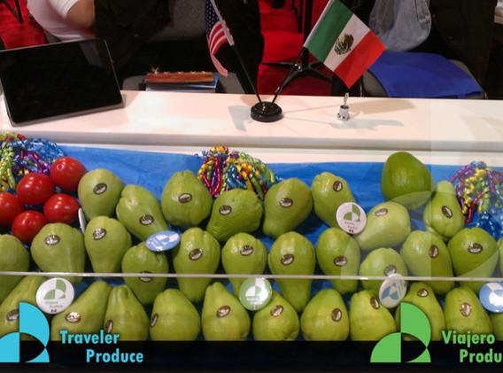 Traveler-Produce-Veracruz-Mexican-chayot