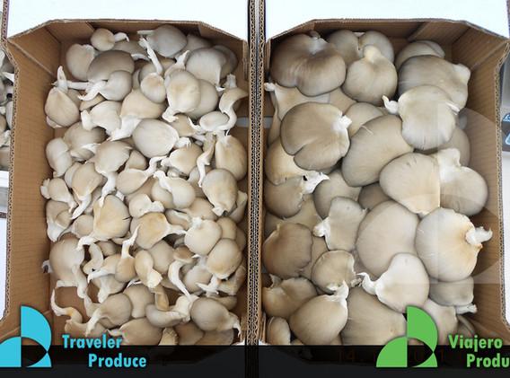 Fungus-Mushroom-producer-Mexico-McAllen-