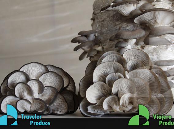 Mexican-Mushroom-retail-supply-wholesale