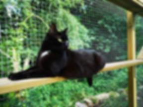 Parcour enclos extu00e9rieur O'Cat Chats