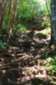 Steiler Aufstieg zum Macchabée-Aussichtspunkt im Black River Nationalpark