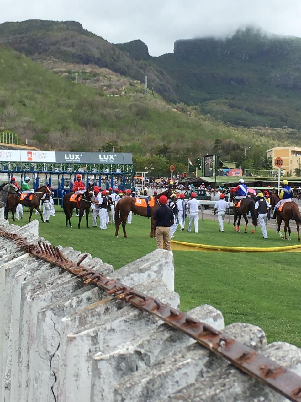 Schaulaufen der Pferde vor dem Rennen