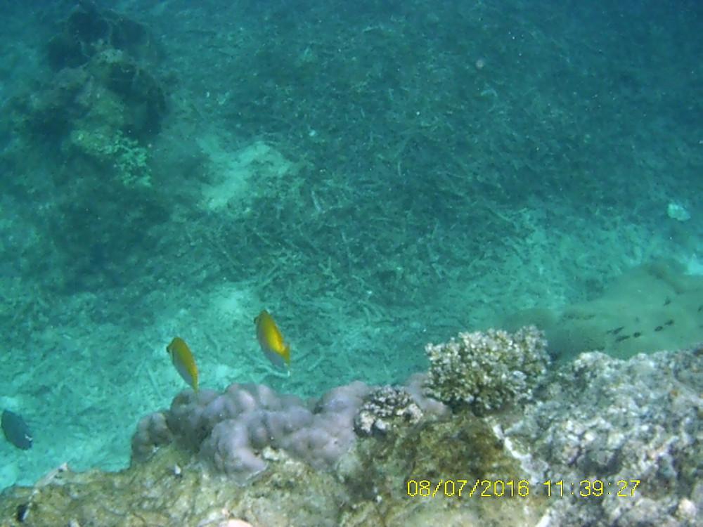 Schnorchelplatz in Flic en Flac: Fische und Korallen