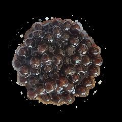 tapioca pearls.png