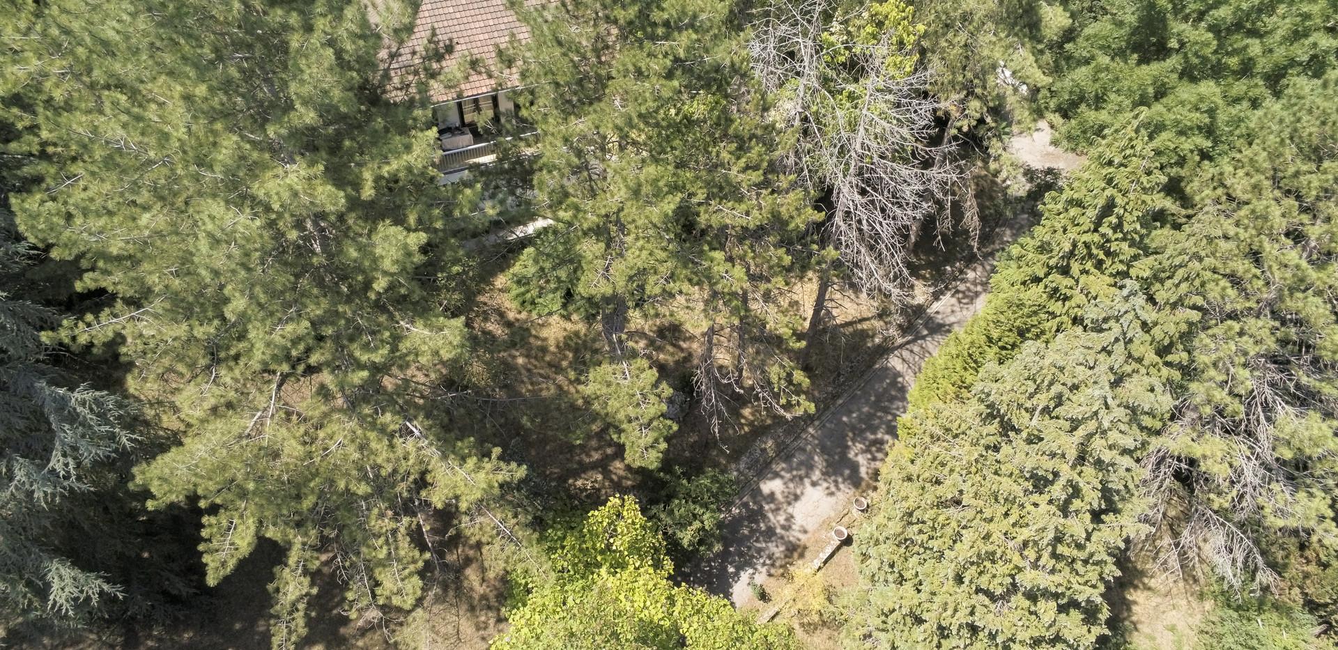 Photo Maison Arborée avec terrain