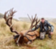 Red-Stag-438-inches.jpeg