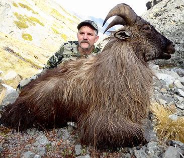 13-inch-9-year-old-free-range-Bull-Tahr-
