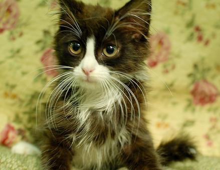 How I Met Max the Rescue Tuxedo Cat