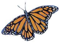 MONARCH BUTTERFLY_HOMEPAGE-01.png