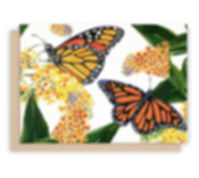 NC-BF01_MONARCH BUTTERFLY_NOTECARDS_WHIT