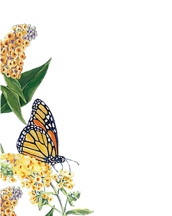 MONARCH_BUTTERFLY_COLUMN_HOMEPAGE_2020-0