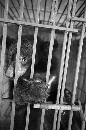 llegal Back Room Bear.jpg