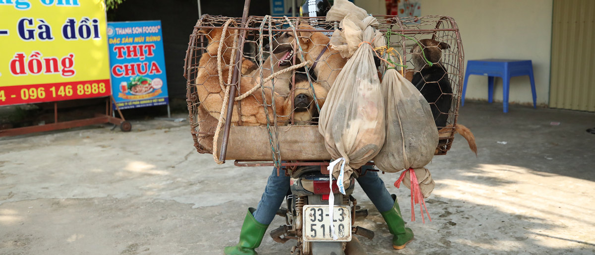 Dog and Cat Catcher in Vietnam