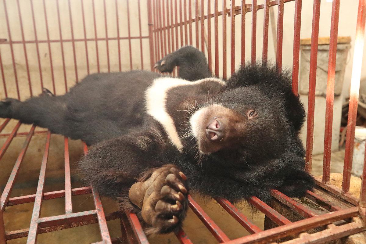 Bile Bear Farm Resized.jpg