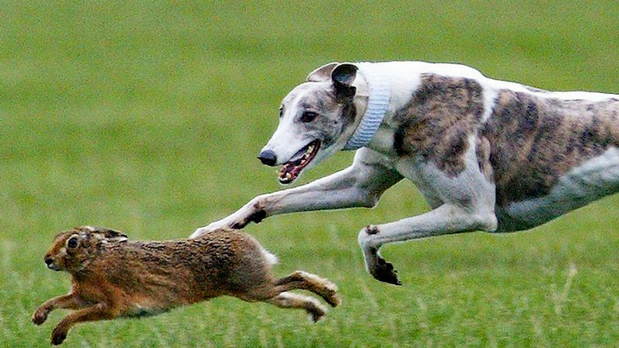 Mandeep's Hare Coursing Petition Photo.jpg