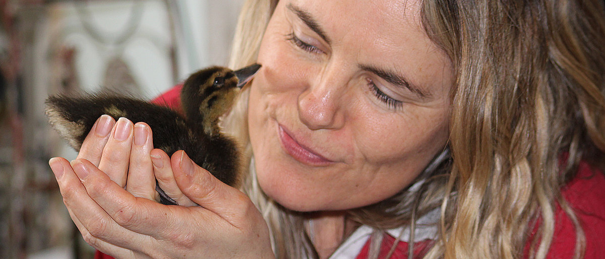 Kate Fox and rescued duckling