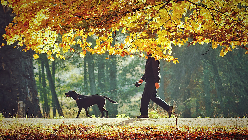 walking-the-dog-nature-autumn-fall-perso